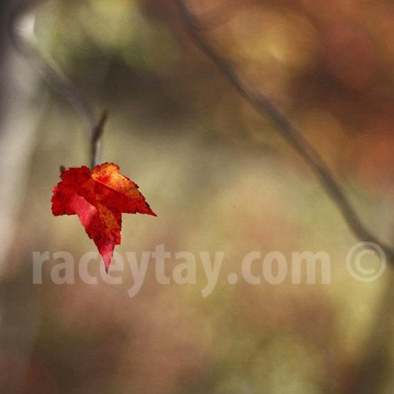 Photograph of a Maple Leaf,  Red Orange Gold, Nature Photography, Rustic Decor, Fall in Canada, Cabin Decor