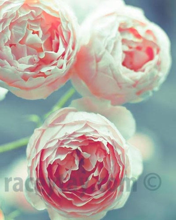 Pink Roses, Blue, Teal, Pink, Girl Nursery Decor, Flower Photography, Shabby Chic, Pink Flower Photos, Paris Print
