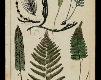1833 Antique print of FERNS, green herbs, plants, hand colored engraving
