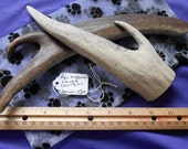 2 Piece Medium-Large Caribou Deer Antler Dog Chews for Moderate Chewers LESS than 25 lbs., s2pmlc-520
