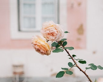 Pink Roses Photo, Flower Art Print, Pink Flower Photo,Spring Decor,Pink Decor,Flower Wall Decor, Floral Wall Decor, Pastel Pink, Countryside