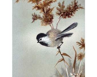 Chickadee Greeting Card | Bird Perches in the Snow Note Card | Vintage Style