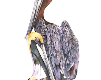 Pelican print of watercolour painting A3 size largest print -P6515- Florida bird painting - pelican watercolour painting