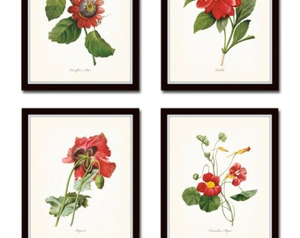 Red Botanical Print Set No. 5, Redoute Botanicals, Giclee, Art, Red Flowers, Prints and Posters, Antique Botanicals, Prints Sets, Wall Art