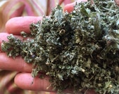Catnip, pungent organic dried herb 1 ounce