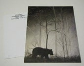 One Postcard Black Bear Trees forest Fine Art Painting standard size 4.25x5.5