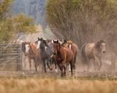 Horses, nature, landscape, horse photography, home decor,office decor,wall art