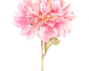 Fine art watercolor painting, flower portrait, pink, red, peony, WATERCOLOR PRINT, giclee print, flower interest