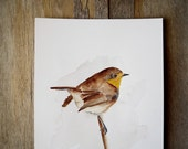 Original painting. Watercolor on paper. Bird painting. Robin bird. Robin. Rustic. Modern watercolor.