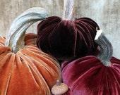 Velvet PUMPKINS & Velvet ACORNS - Real Pumpkin Stems and Real Acorn Caps - Fall Too
