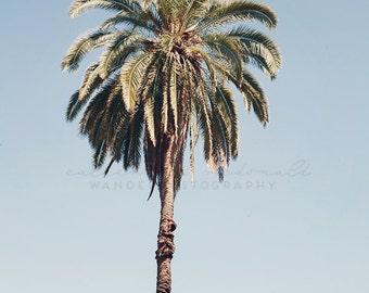 Palm tree print, California Photography, Los Angeles Photograph, Hollywood, Bohemian Wall Art, California Decor, Vintage print, Poster Size,