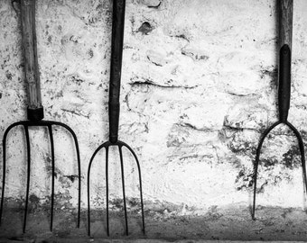 Old Ireland Print - Vintage Forks Black and White Photograph