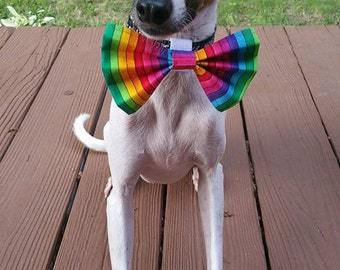 RainBOW- TurBOW Collar Bow!