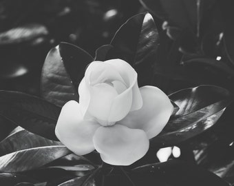 magnolia photography, southern magnolia, southern decor, magnolia print, black and white photography, large wall art, magnolia art, elegant