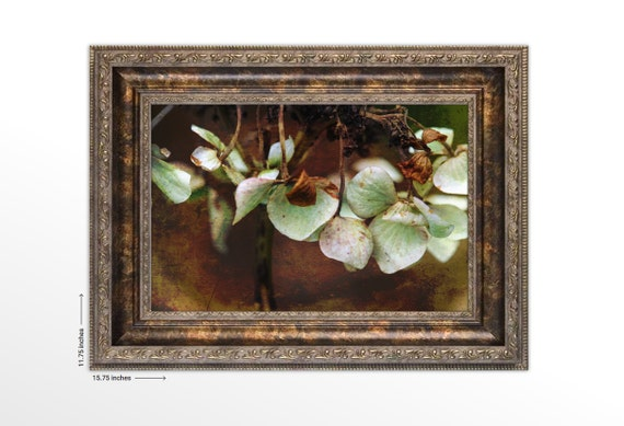 Dried Hydrangea. Framed Fine Art Print. Nature Photography. FREE SHIPPING.