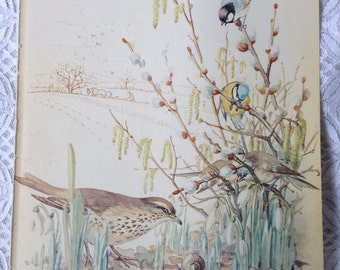 Vintage Botanical Book Page - February - Thrush - Snowdrops - Blue Tit - Nature Notes of an Edwardian Lady - Edith Holden - Country Diary