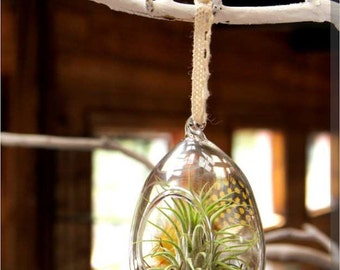 Glass Orb Hanging Terrarium with Live Air Plant - 2.5 x 2.5 x 4.25 in