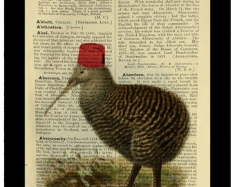 Vintage Kiwi Bird Wearing Fez Absurd Curiosity - Dictionary Print Book Page Art