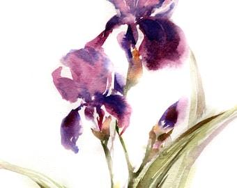 Purple Irises Art Print, Watercolor Print, Iris Watercolor Painting, Floral Wall Art, Flowers Illustration