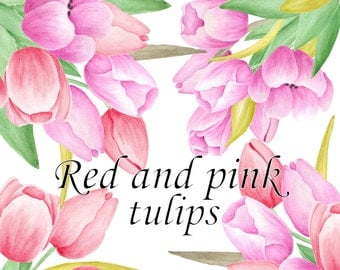 Tulip clipart | Etsy