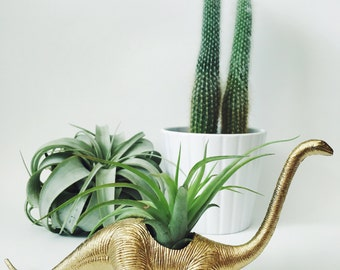 Small Gold Brontosaurus Dinosaur Planter with Air Plant; Dinosaur Planter; Dino; Home Decor; Desk Accessory; Office Planter; Gift; Party