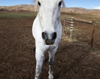 Mini Version: Photograph of Colorado Horse