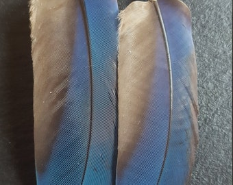 Natural Blue Parrot Feather Earrings with Acai seed