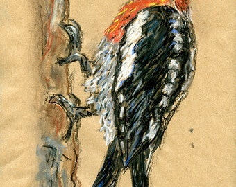 Original Drawing - Woodpecker, Red Breasted Sapsucker - Bird Art in Charcoal, Chalk Pastel & Ink