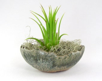 Sage Green Bonsai Accent Pot, Mini FlowerPot, Stoneware Kusamono Planter, Small Glazed Succulent Pot, Rounded Bonsai Planter,  01-16-68 -71