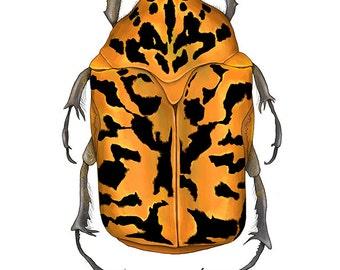 Venezuela Beetle Illustration