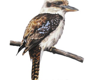 Bird Print - bird art - Kookaburra print