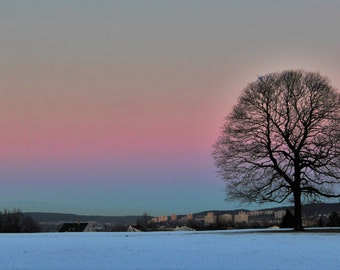 "Beautiful Art Photography Print of Lone Tree in Snowy Landscape at Sundown - 15"" x 10"" Giclee Pink Sky Winter Norway Nature Skyline Field"