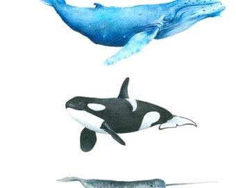 whale print - whale art - whale illustration - art print - nursery wall - kids room - A4