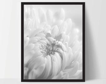 Flower Photography, Wall Art, Artwork, Home Decor, Modern Print, Print Art, Abstract Art, Black White, Decorations, Digital Print
