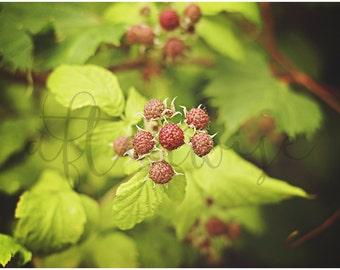 Raspberry Photo. Raspberry Print. Food Art. Food Photography. Nature Photography. Nature Print. Kitchen Art.