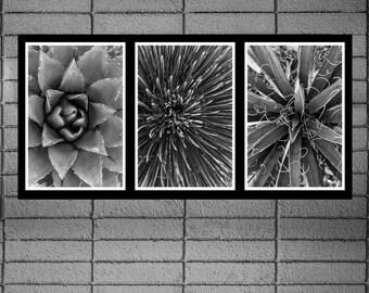 Fine Art Prints - Agave Trio - Three black & white photographs, gift ideas, present, home office wall decor triptych