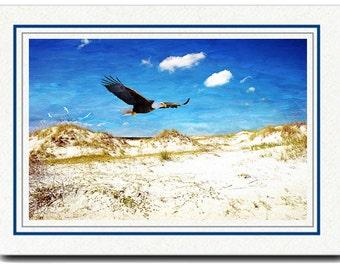 Photo Greeting Card, Photo Note Card, Bald Eagle Flying, Ocean Beach, Handmade Card, All Occasion Card, 5x7 Blank Card, Fine Art Print