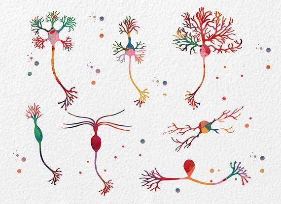 Stunning Neurons on Canvas Painted by a Neuroscientist |Neurons Art