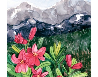 Alpenrose (Rhododendron in Alps)