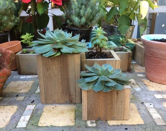 Three Piece Set of Succulent Planters