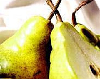 Brandied Pear™ - 16oz Fragrance Oil