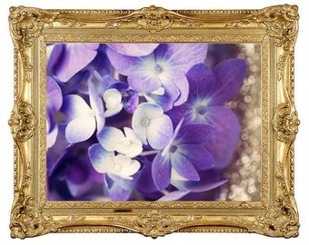 Purple and Gold Hydrangea Photograph Print