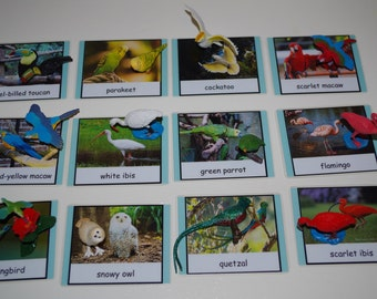 Exotic Birds Montessori 3-part cards-- Montessori early learning educational material