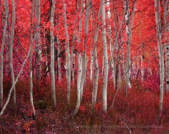 Red Aspen 8x10 high quality print