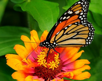 Flower Mix Bring Home the Butterflies Seeds  Large Pack