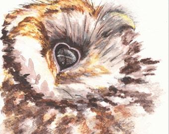 Owl - Original Watercolor - 5 x 7