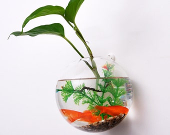 Wall bubble terrarium // wall plant planter vase// wall mounted bubble glass fish bowl // great for indoor decoration wall gardening