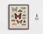 Zoological illustration, vintage style, scientific drawing - Collection of Moths