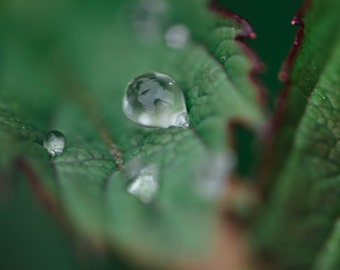 Leaf with Raindrop
