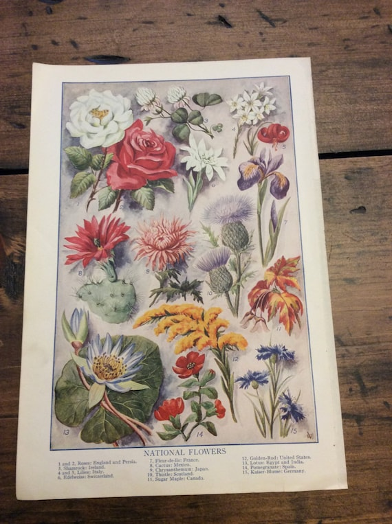 Antique Print, Botanical, National Flowers, Book Plate, Lithograph (B014)